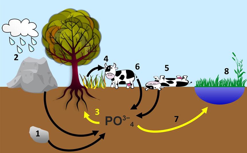 Tomatosphere Tomatosphre Nitrogen And Phosphorus Cycles
